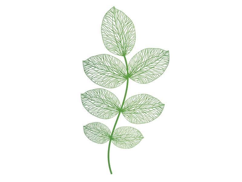 Les Phytopigments végétaux